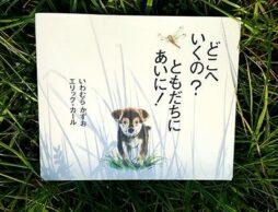 【英語絵本】左から英語で読む、右から日本語で読む絵本