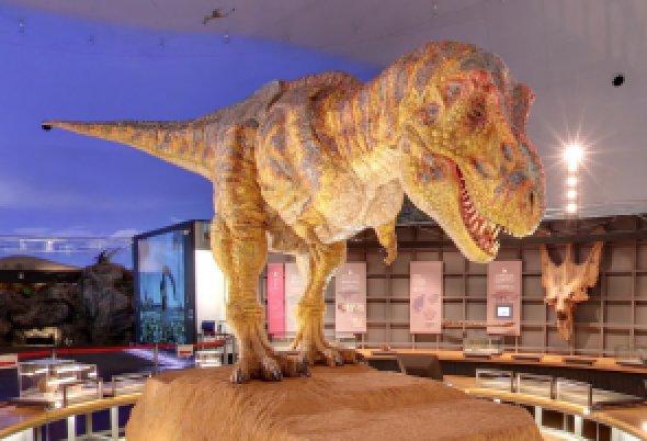 【news】夏休みに「恐竜博士体験ツアー in 恐竜王国福井」へ行ってみよう!