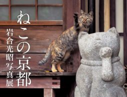 【news】動物写真家 岩合光昭の新作写真展「ねこの京都」が2017年5月に開催!