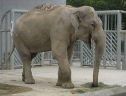 【news】七夕、あなたの願いを叶えます!~動植物園が夢の体験実現イベントを初開催~