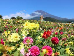 富士 花めぐりの里