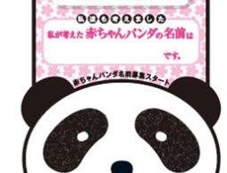 赤ちゃんパンダの名前募集がスタート