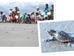 """浜はいのちの""""ゆりかご""""ウミガメに触れ合い、環境変化を考えるイベント"""