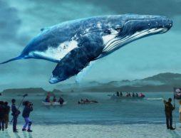 【news】第1位は『おクジラさま ふたつの正義の物語』byぴあ映画初日満足度ランキング