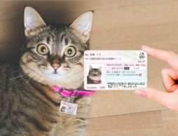 【news】愛猫の身分証明書『マイニャンバーカード』、2018年2月22日より『発売1周年記念 猫の日特割』開始!!