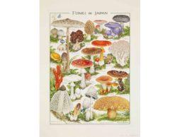 【news】3/25まで!『小林 路子 菌類画の世界~きのこに会いにいきましょう!~』美術館「えき」KYOTOで開催中