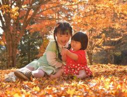 情緒を育む!鮮やかな紅葉の絵本で、秋を楽しもう