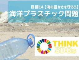 子どもと考えるSDGs|海洋プラスチック問題から海を守ろう